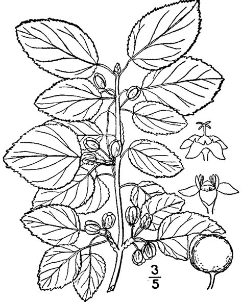 Tree Diagram Coloring Page | free coloring pages of parts of a tree diagram
