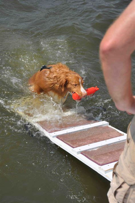 boat ladder for dogs how to get your dog back in the boat after swimming the