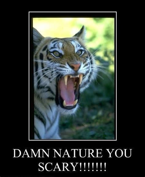 Damn Nature You Scary Meme - image 60173 damn nature you scary know your meme