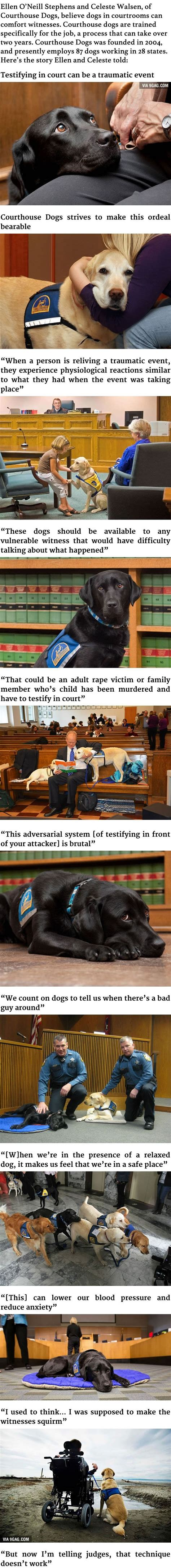 comfort animal certification these courthouse dogs are trained to comfort witnesses in