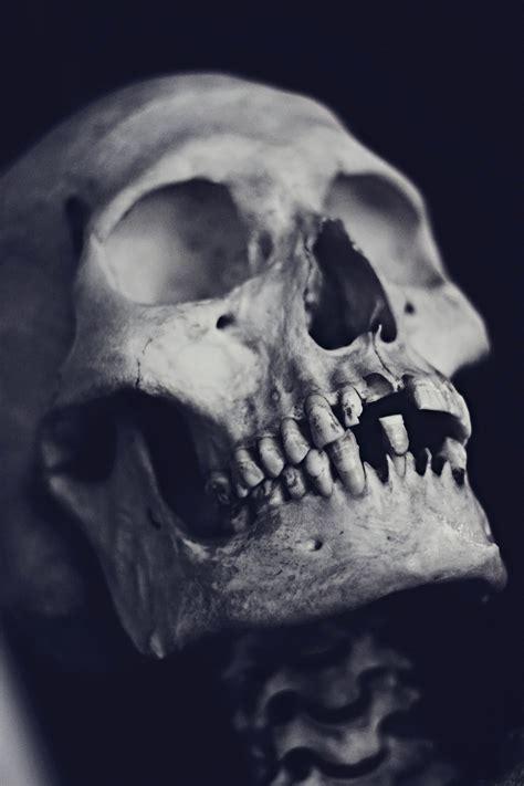 Skulls Favourites By Tiggytattoos On Deviantart Skull On
