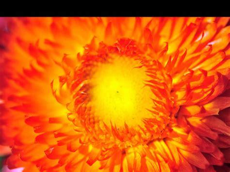 imagens de flores e rosas paisagens e imagens bonitas as mais belas flores youtube