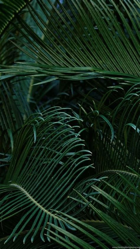 iphone green nature plants backgrounds wallpapers