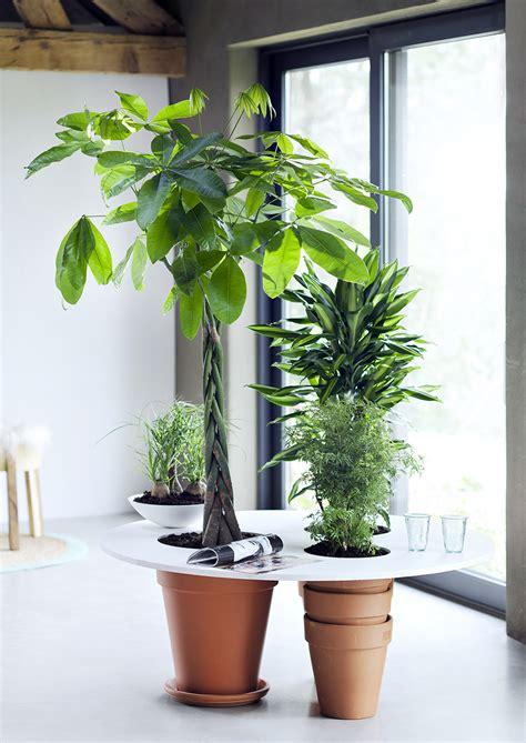diy tip multifunctional indoor trees  joy  plants