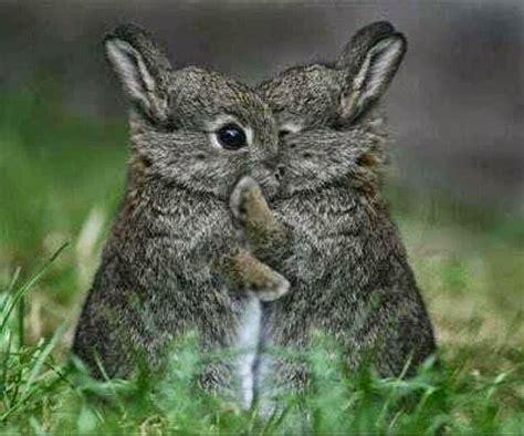 imagenes animales abrazados 17 mejores im 225 genes sobre imagenes tiernas en pinterest