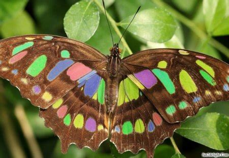 colour box butterflies animals background wallpapers