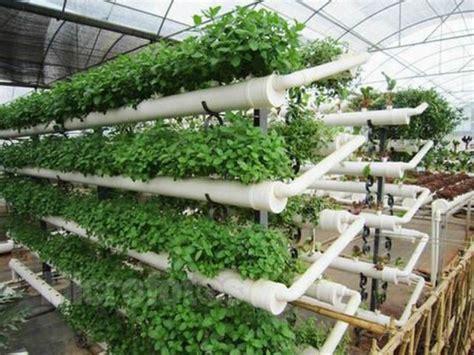 vertical vegetable garden diy pvc pipes silahsilahcom