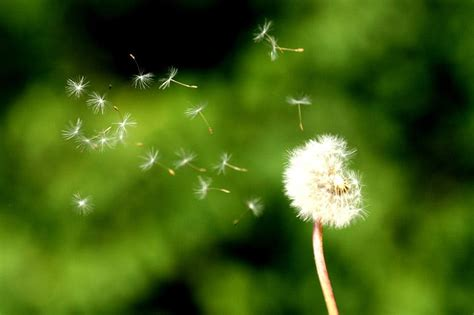 Bunga Dandelion 1 top 12 signs it s time to move on from a relationship personal excellence