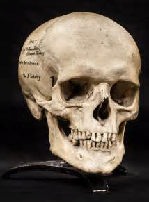 gift ideas human skulls from the mutter museum