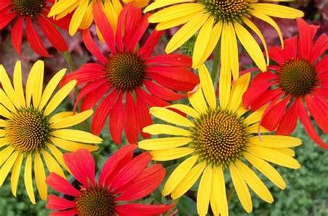 home depot canada bogo perennial flowers printable coupon