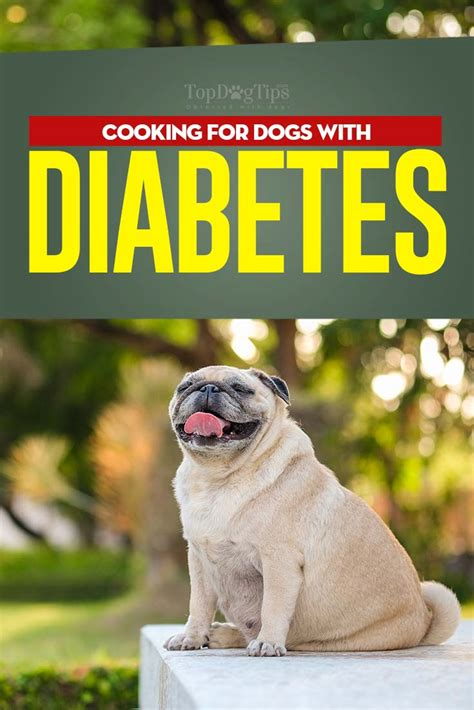 what to feed dogs diabetic diet what to feed a diabetic and what