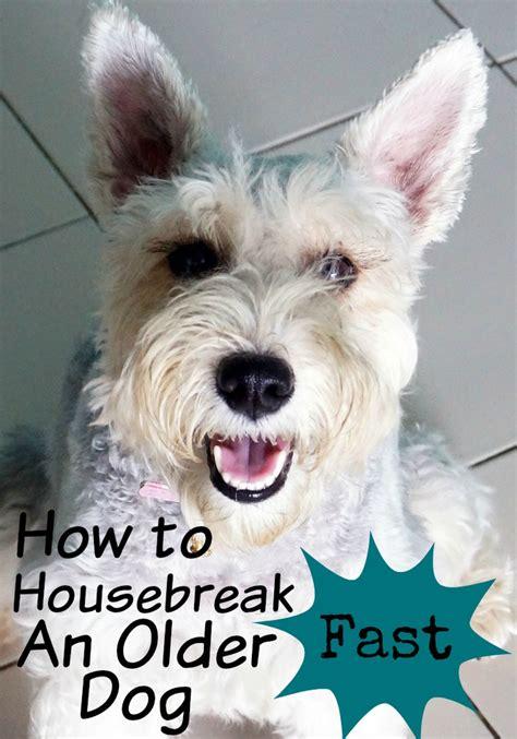 How To Housebreak An Older Dog Fast Dogvills