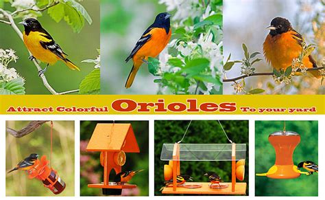 how to attract baltimore orioles to your backyard how to attract baltimore orioles to your backyard