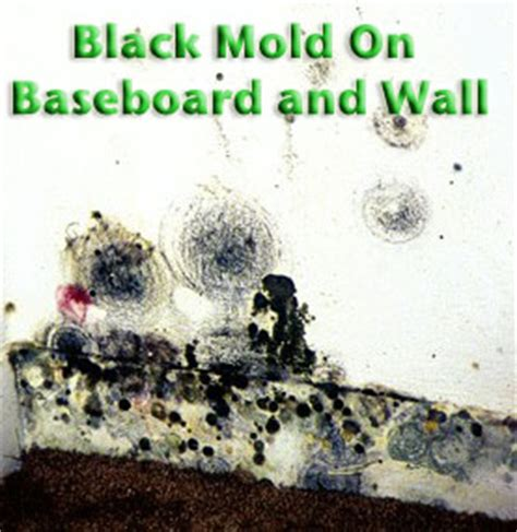 mold in bathroom health risk toxic mold