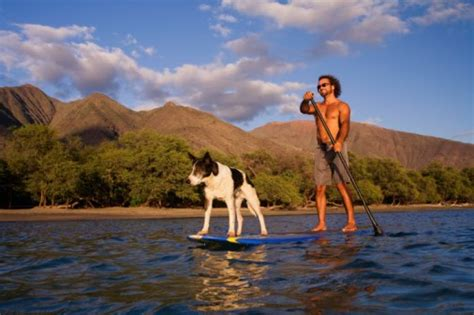 boat harbour kurnell dog friendly dogs stand up paddleboarding dog friendly cornwall