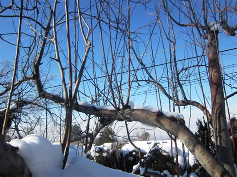 best way to water fruit trees fruit tree pruning at its best water sprouts