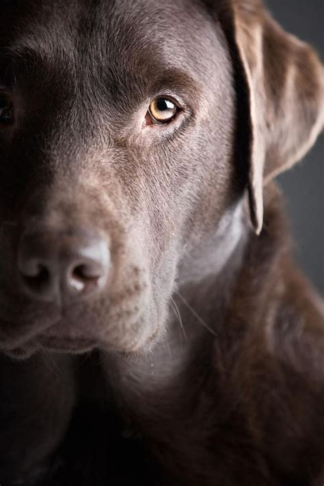 what does chocolate do to dogs crufts 2015 britain s favourite dogs