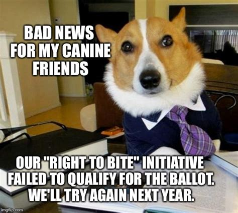 Dog Bite Meme - lawyer dog imgflip