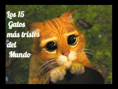 imagenes mas tristes del mundo los 15 gatos mas tristes del mundo im 193 genes youtube