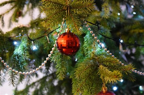 christmas blog for all your festive news guides