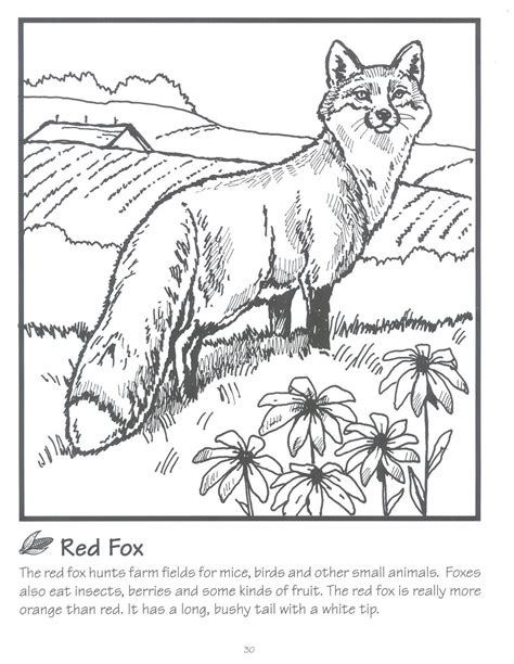 fox adult coloring book coloring pages