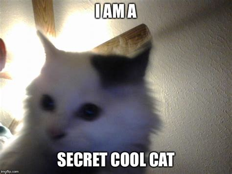 Cool Cat Meme - oh my gosh cute memey cat imgflip