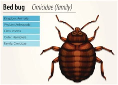 bed bug registry nc insect bite identification chart pictures to pin on