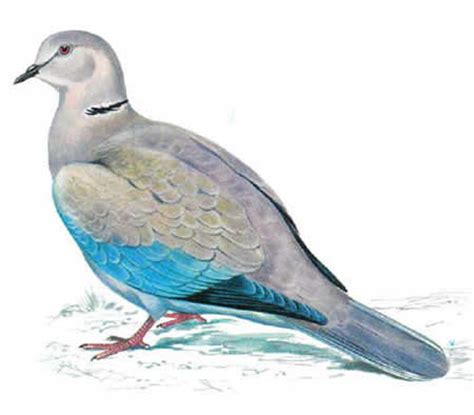 Shoo Dove the color dove the best dove 2017