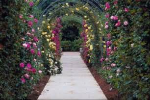 climbing plants for arbors the best climbing plants for arbors with pictures ehow