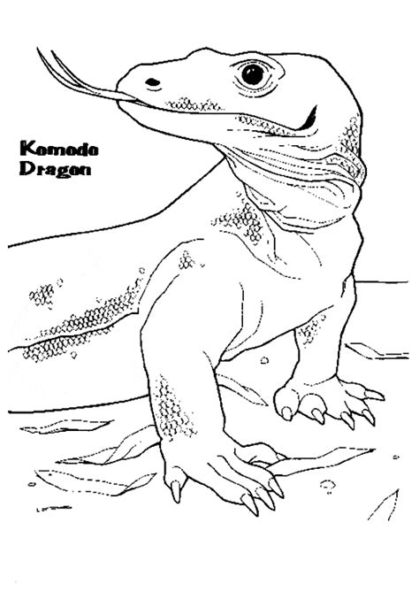 komodo dragon coloring page animals town free komodo