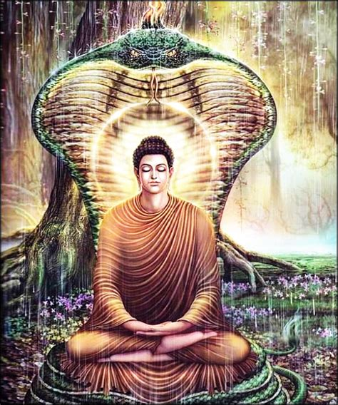 beverly buddha the true story of an enlightened rogue books daily dhamma drops from ceylon page 91 dhamma wheel