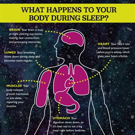 What Happens To Your Organs During A Detox by Sleep Hap