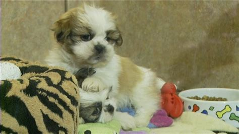 ottawa pet store bylaw change would ban for profit sale of
