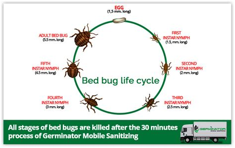 bed bug life span ozone sanitizing a fast and easy way to eliminate bed bugs