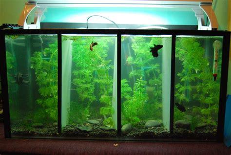 betta tank fish on pinterest betta betta tank and pet supplies