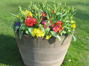 a pot with flowers free stock photo public domain pictures