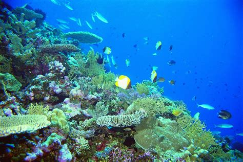 great barrier reef dive trips the tour specialists cairns