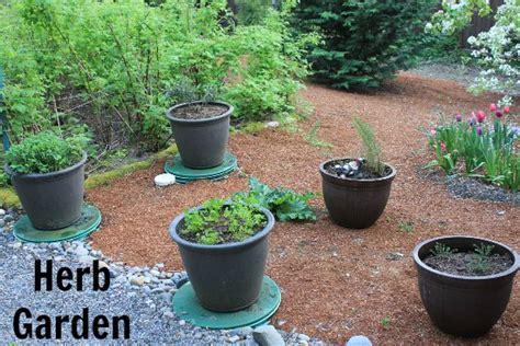 container herb garden container herb garden growing basil parsley