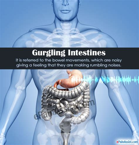 stomach gurgling gurgling intestines what causes your stomach to growl