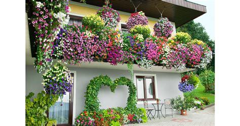 winterharte bepflanzung gartenwelt emsb 252 ren die typischen balkonpflanzen