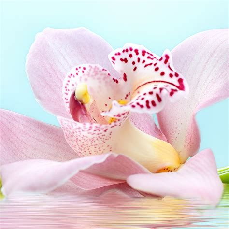 how to your to bring the back how to bring your orchids back to