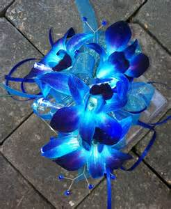 shocking blue dendrobium orchids prom