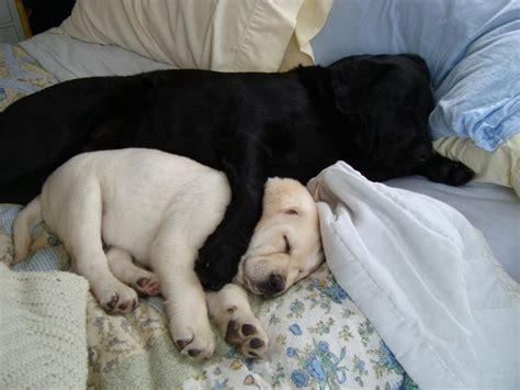 cuddling puppies stvari koje nas čine srećnim page 213