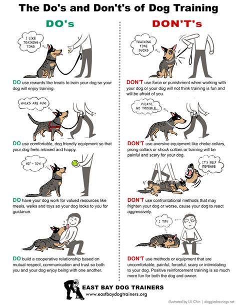 how to leash a how to leash a puppy dogable