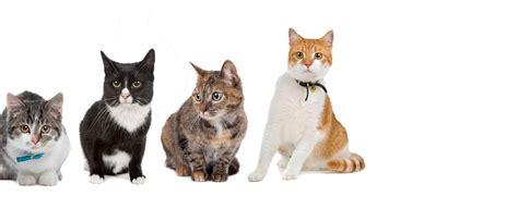 east lincoln animal hospital denver nc cat kennel denver denver nanny cats walkers