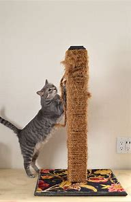 Image result for cat scratcher