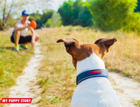 how to your recall how to stop aggression my puppy story