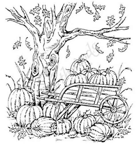 rubber tree coloring page 34 best images about northwoods on pinterest pumpkins