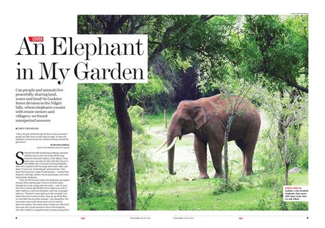 Elephant In The Garden by 23 An Elephant In The Garden Decor23