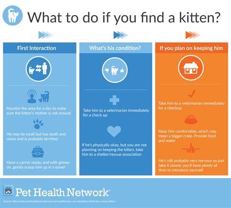 what to do if you what to do if you find a kitten